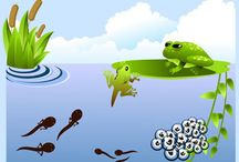 ochrana prírody