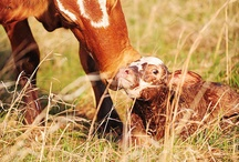 Cows / #cattle #cow #calf #bull