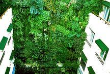 I VERTICAL garden I