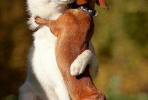 Way too cute! / animals