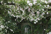 Trädgårdsinspiration