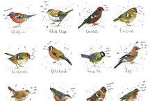 My work: British Garden Birds / birds, garden birds, garden, hares, wildlife,  Michelle Campbell Art. Licensed Art, Licensing, Art for Licensing.