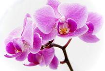 flori cu personalitate