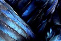 Inspiration/blue