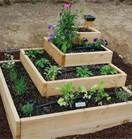 Plants/Garden