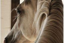 Horses...Beautiful Horses / by Paula Berry-Palmer