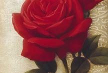 rosa evelina