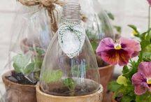 Pflanzen, Terrasse, selbst gemacht