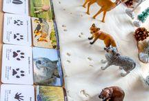 Winter kindergarden - animals