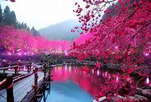 Japon / Les merveilles du Japon