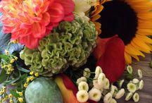 Fleurs D'automnes / Chaque saisons apporte des fleurs et des couleurs, pour l'automne Le rouge, le orangé et le jaune sont prédominants. Les tournesols, les chrysanthème et les dahlia sont les variétés les plus populaires.