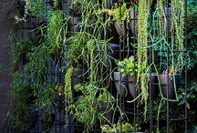 plantevegger