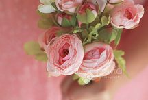 Roses. Pink of course / Roses