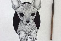 Study(Animals)