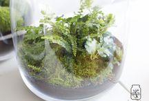 Las w Słoiku - Forest in the jar