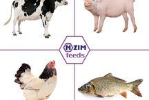 Препараты ENZIM Feeds
