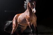 At fotoğrafçılığı