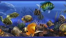 Sea Life and Ocean Room Decor / Gorgeous ocean themed wall murals and decals from the wallstickeroutlet.com