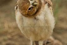 Owl, owl, owls