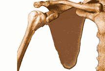 svaly těla