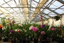 Open House 2014 / Brookside Orchids Open House & Sale, Sept. 20-21 2014. Come visit the nursery at 2718 B Alpine Road, Menlo Park, CA. 94028