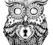 Drawing Owl