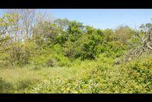 Land for Sale in Corfu Greece / Cpa corfu presents you lands for sale in Corfu island Greece
