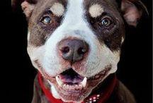Senior dog awareness