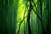 Japan_Nature & Garden