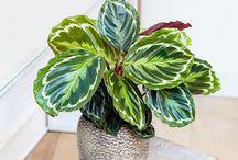 plante de interior care au nevoie de putina lumina
