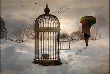 Bird Cages / by Karen Boisselle Resinski