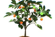 CHG | Artificial Fruit Trees+Ivy+Flowers