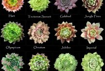 Succulents / by Jennifer McGuire