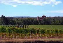 Gavi: wine and territory / Gavi since 972AD: the unique 'terroir' of the great white Piedmontese wine.  Gavi dal 972 d.C.: il 'terroir' unico del grande vino bianco piemontese.