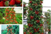 plantaciones de frutos