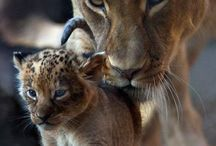 Gaia love affair / Nature Earth  Universe Animals