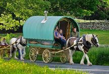 Gypsy Caravans / Gypsy Vanner Horses