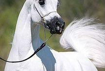 konie / konie to moja milość
