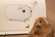 Guinea pig pig