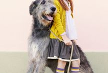 Irish Wolf Hound is in my future, LOVE!