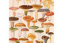 Mushrooms  / by CrowBiz / Carol Wannemacher