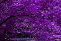 Árvores  Maravilhosas