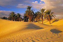 Тунис / Тунис – лучшее направление для Вашего восхитительного летнего отдыха! Цены на туры вполне доступные даже в сезон.