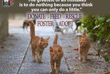 Animal Welfare Awareness / by Joan Redd