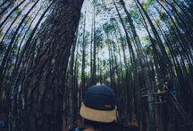 treessss