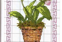 Orchidée point de croix