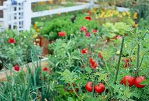 Vegetable garden / by Jennifer Heinschel