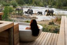 SAVE more than 30% on a LUXURY LAST MINUTE SAFARI: Londolozi 2-6 March in the Private Granite Suite / SUPER SAVER at One of Africa's TOP LODGES http://www.south-african-lodges.com/lodges/londolozi-private-game-reserve/