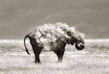 Doğru Perspektifi Bulup Harikalar Yaratan Hayvanlar