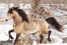 Pferde&Ponys